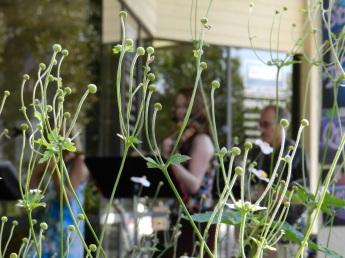 STQ@WineWalk_artistic plant shot