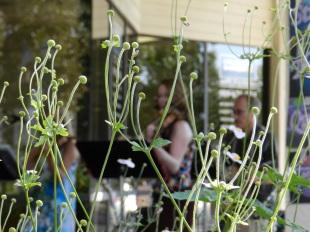 artistic plant shot